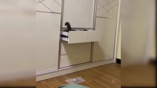 Cat entering the drawer.