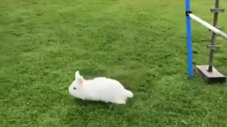 I believe i can fly   cute rabbit playing