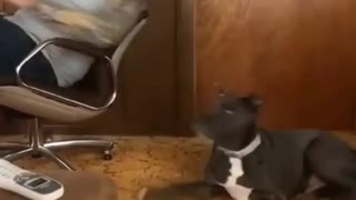 Dog scared with home people