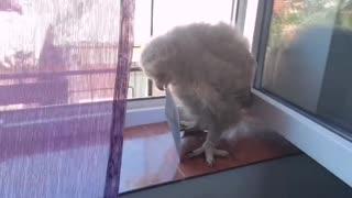 Owl Delivers letter from Hogwarts