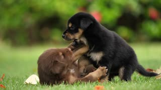 Funny dogs play with each other in medicinal