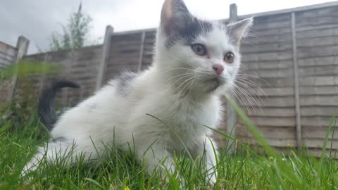 White Cat on Grass new