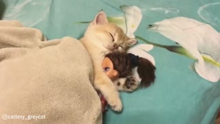 Adorable Little Kitten Sleeping With A Doll
