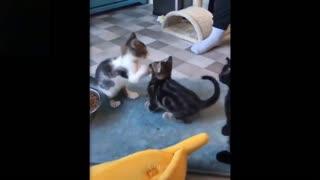 Three cute kittens playing