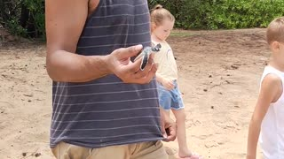 Saving a Stranded Baby Turtle