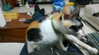 A Cute Cat Giving A Rough Massage