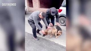 Dog 'Cries'