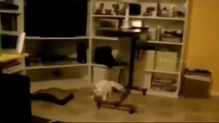 cats. Funny cats. Compilation #6
