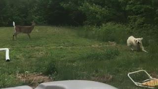 Doggo Playing with Deer in Backyard