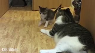 A Little Kitten Trying To Play With Her Father.