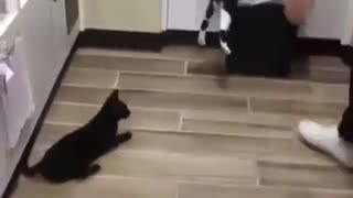 playing with cats