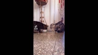 My friend | Cat lover