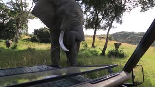 Dangerous Animals CAUGHT Being Friendly