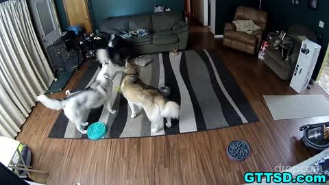Hidden camera captures hilarious dog behavior