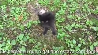 he found an abandoned kitten