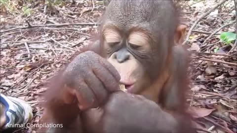 Silly baby monkey