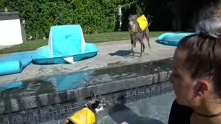 Cute Dog Swimming: Teaching Your Dog How To Swim