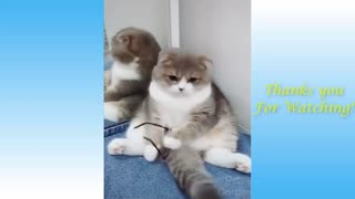 Having a bad day ? Here's some Cats *Funny*