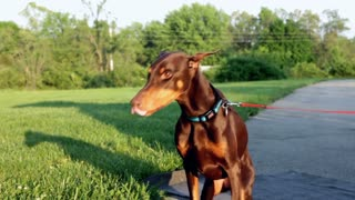 Dog training program for your lovely dog