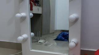 Cat Excited to See Reflection in Mirror