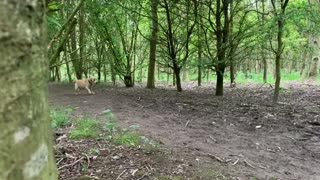 Playing hide and seek with a dog