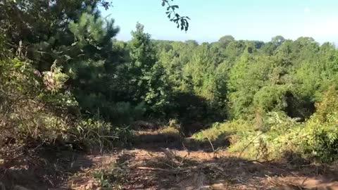 Wednesday Walk In the Woods - Episode 9