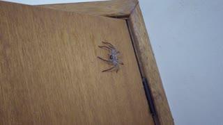 Bathroom Surrendered to Spider