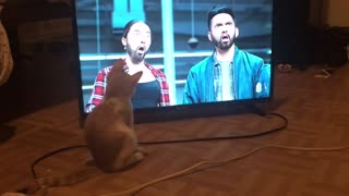 My Cat must really love Eminem😂