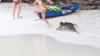 Monkeys Chase Woman on Beach
