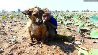 Monkey rescued by dog