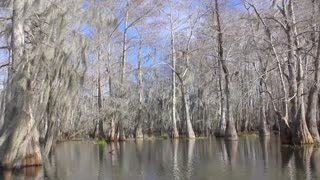 Peaceful Swamp Journey
