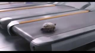Turtle on a treadmill