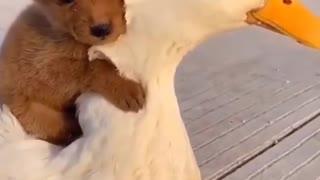 Mi pequeño perrito chocolate