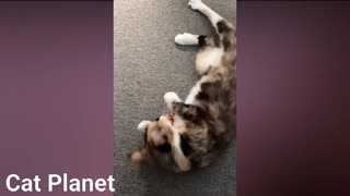 Funny Cats Compilation - very cute