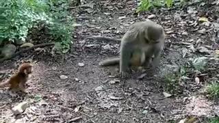 animals Lovely Monkeys Videos 2021