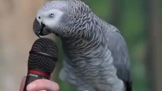 Einstein Parrot Talking Amazing video