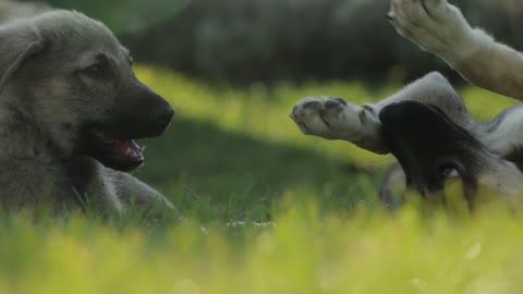 Petting innocent dogs