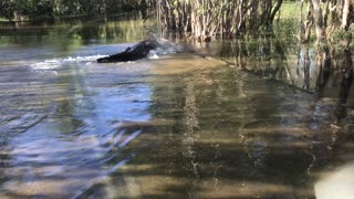 Blacky the Giant Crocodile
