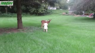 Little girl plays with fawn 1