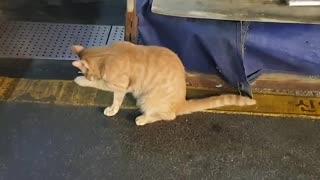 It's a wild cat, isn't it cute?
