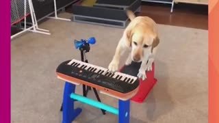 TALENTED POOCH PLAYS MUSICAL INSTRUMENT