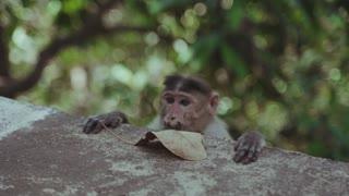 cute monkey .o