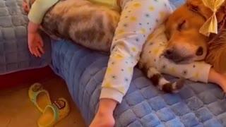 Funny Dog, Funny Animals, I Like pet