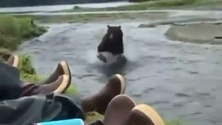 Brown bear encounter in Alaska 🐻