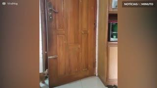 Gato abre porta com a maior facilidade