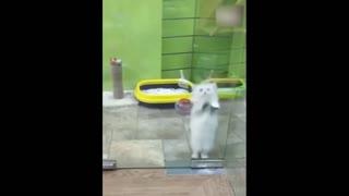 kitten dancing