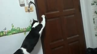 Cat Lets Itself Out