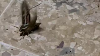 Flying Insects in Super Slow Motion