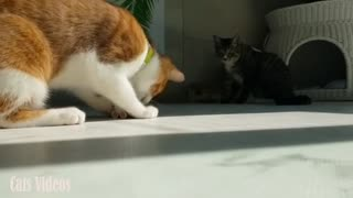 A Cat Trying To Catch A Toy Rat