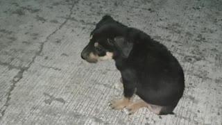 Puppy Love Part 2